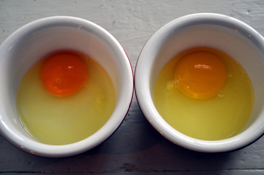 Egg Anatomy Q&A : Homegrown on a Hobby Farm